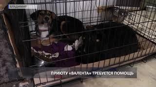 «Валента» бьет тревогу: в приюте закончились корма для животных (2019 03 13)