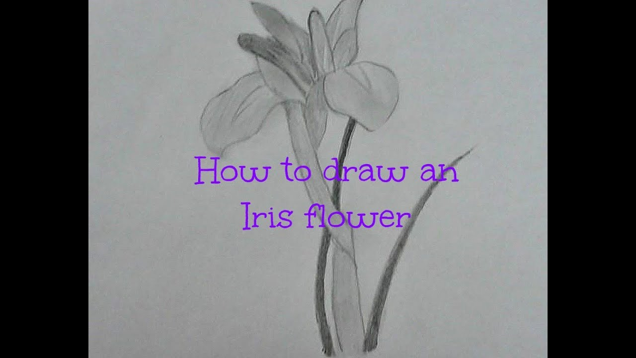 How to draw an iris flower youtube for How do i draw a flower