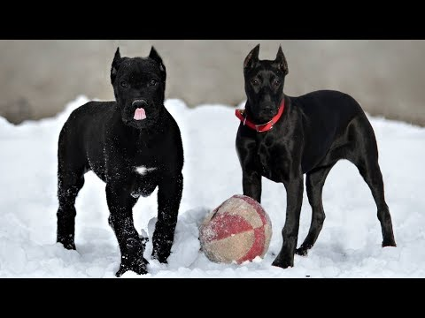 10 Most Interesting Terrier Dog Breeds