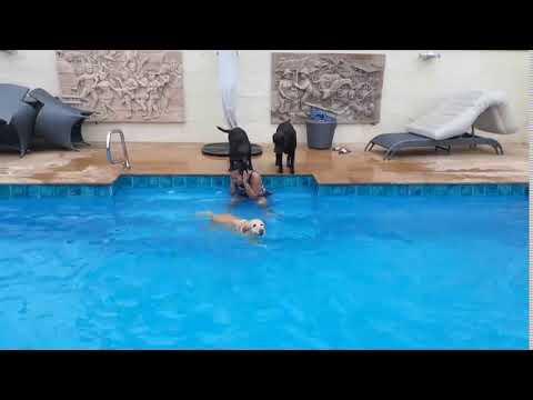 8m Centurion Swimming Pool   Fiberglass Pool Phitsanulok Thailand