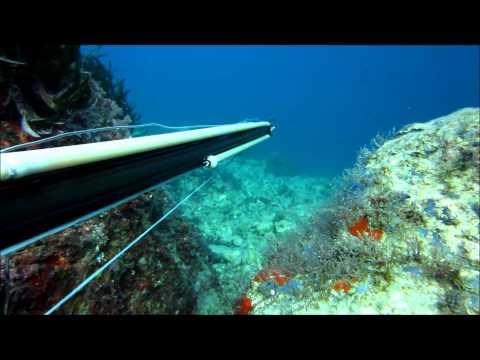 Chasse sous marine - Un sar de Cap Ferrat - Pescasub Sarago di Riccardo Sandroni