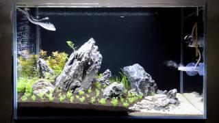 Аквариум 60 литров и Chihiros A601