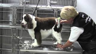 Springer Spaniel Clipped- Body- First Time Over (outline) 1