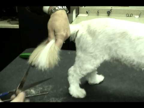 Shih Tzu Trimming The Tail Youtube