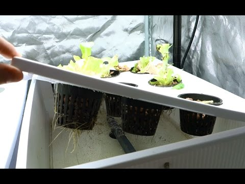 How To Clean Hydroponic Reservoir