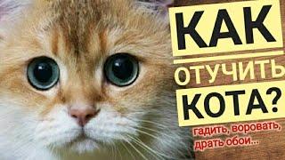 Как отучить кота гадить / метить / лазить / драть / Обои кот драть перестал / Кот и кошка