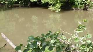 Рыбалка в РФ на речке в середине лета