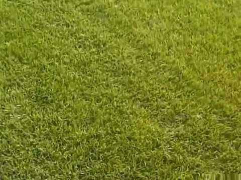 Deszczownia Ferbo w podlewaniu trawy rolowanej