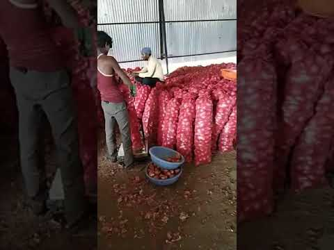 Dubai, Singapore, Malaysia, Shrilanka, Vietnam,Quatar, Kuwait quality Nashik Onion Exporter, Suplier