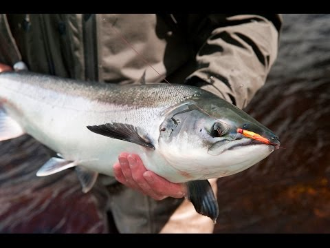 Fly Fishing For Atlantic Salmon, River Finn - One Of Ireland's Finest Rivers