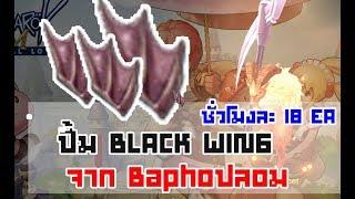 ปั้ม Black Wing ชั่วโมงละ 18 อันจากบาโฟปลอม - Ragnarok Eternal Love