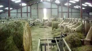 bon appetit les vaches !!!