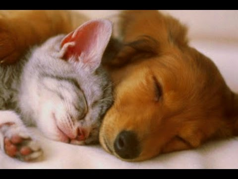 PET THERAPY ♣ Sleep Music w/ Binaural Beats for Dogs & Cats - Sleep Disorders - 2 HOURS