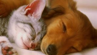 PET THERAPY ♣ Sleep Music w/ Binaural Beats for Dogs & Cats  Sleep Disorders  2 HOURS