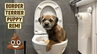 Toilet Training a Puppy in an Apartment | Border Terrier Puppy | Training Ep. 1