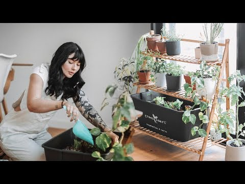 productive Sunday routine || indoor plants & zero waste DIY