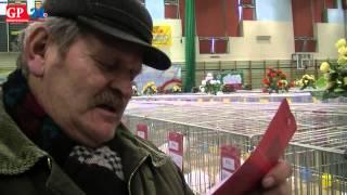 Wystawa gołębi rasowych i ptaków ozdobnych w Kobylnicy