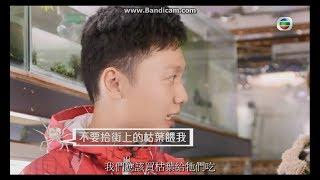Think Big 天地   「動物說不完」介紹「迷你蜘蛛蟹」