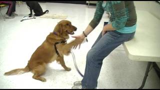 Charlie And Bella Tricks - Clicker Training Tricks Class In San Diego - Pam's Dog Academy