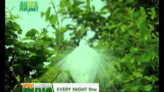 Yeh Mera India Anthem - Animal Planet + Discovery Channel - HQ