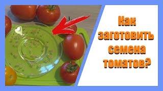 Как правильно заготавливать семена: заготовка семян помидоров