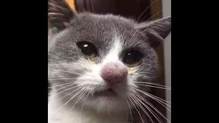 Смешное видео про котов #2
