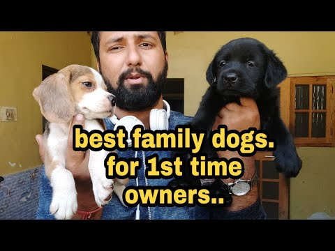 Best Dogs For 1st Time Owners