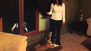 Dramatic Dog Training Results In 1 Week