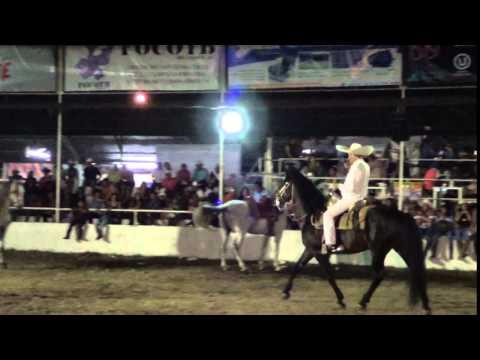 caballos bailadores : don tony fierro 18/10/15