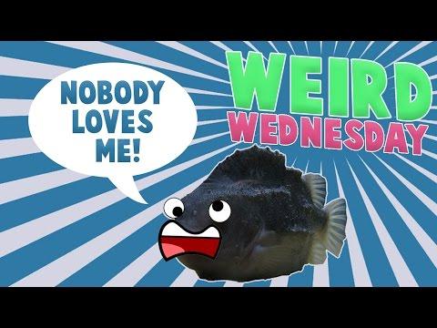 Weird Wednesday - No Love For Lumpsucker