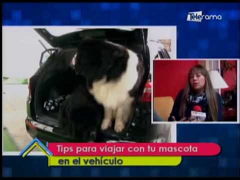 Tips para viajar con tu mascota en el vehículo