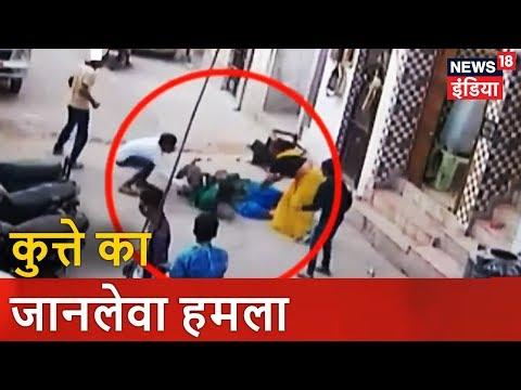 Pit Bull Terrier Dog Attacks   कुत्ते का जानलेवा हमला   News18 India