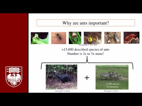 Biodiversity and the Evolution of the Ants: Talk by Corrie Moreau