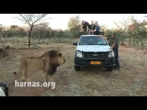 Harnas Wildlife Volunteer Work Opportunities in Namibia, Africa.