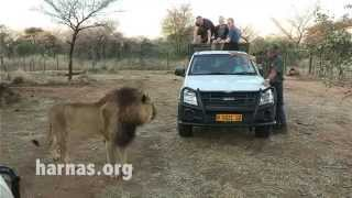 Harnas Wildlife Volunteer Work Opportunities in Namibia, Africa.