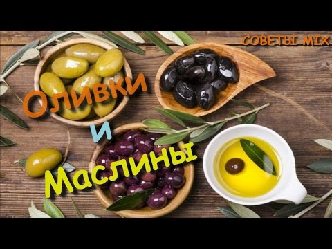 Все что нужно знать об оливках и маслинах. Разница маслин и оливок