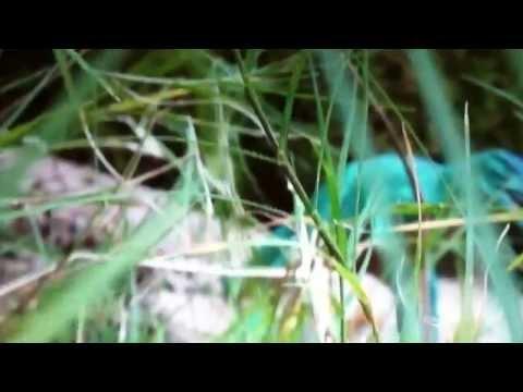 Tyrannosaurus life episode2