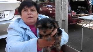 Одесса. Староконный рынок -3. Продажа собак. Осень 2014.