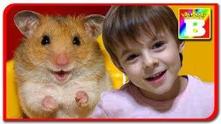 Casa noua pentru Hamsteri  Vlog cu Hamsteri La Bogdan`s Show