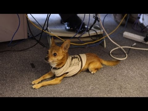 Can You Take Your Dog to Work and Still Work?