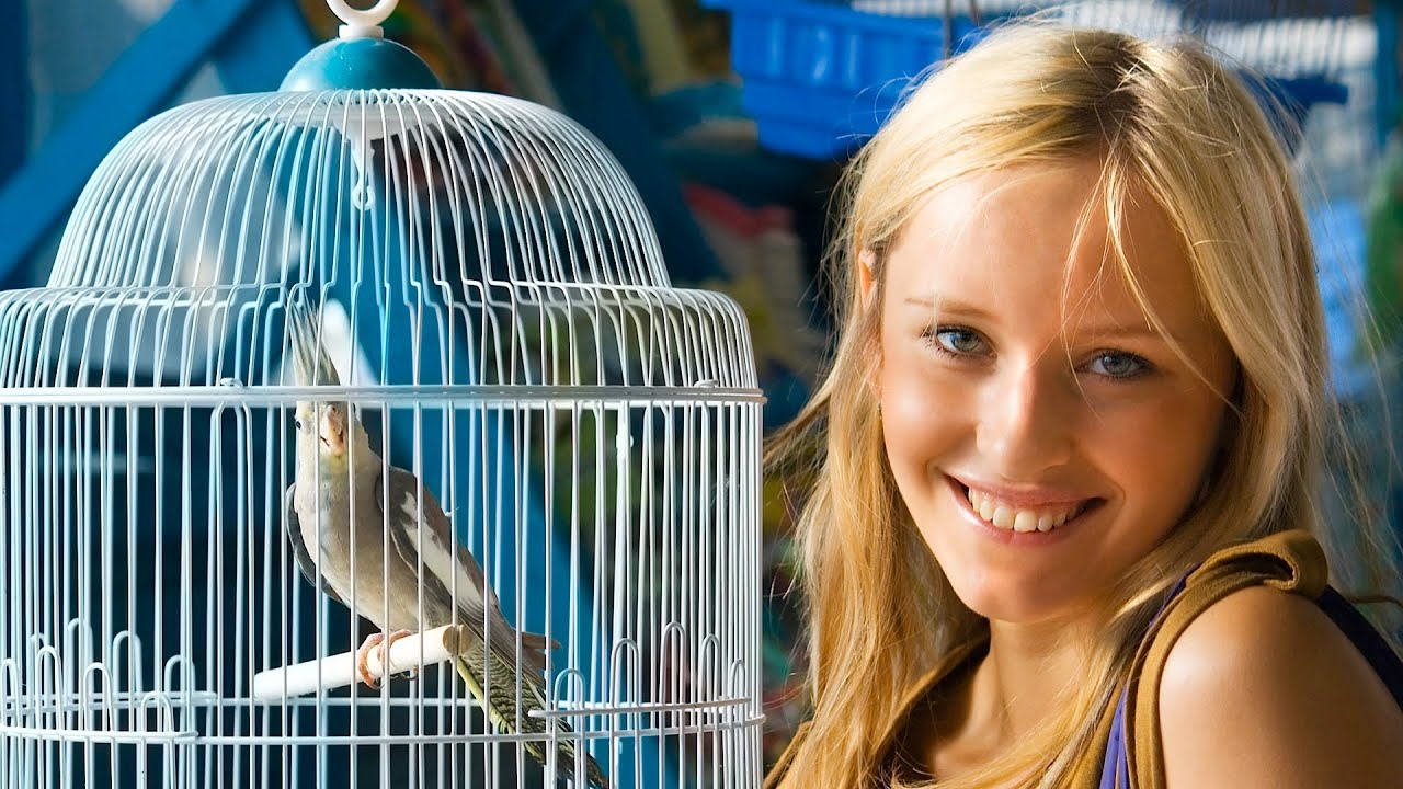 What Are The Best Apartment Birds Pet Bird