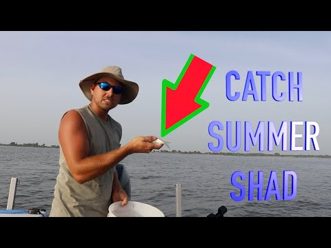LOBSTER DIVING - How To Catch Crayfish from YouTube · Duration:  19 minutes 40 seconds