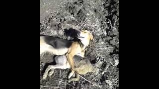супер охотничья собака