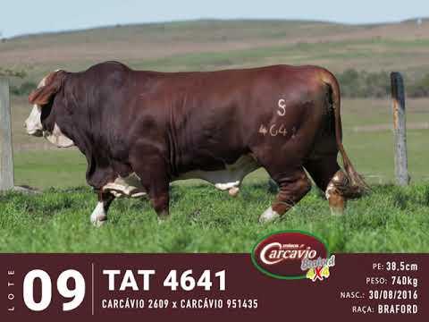 LOTE 09 - TAT 4641