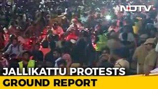 At Chennai's Marina Beach, Thousands Still Protesting For Jallikattu