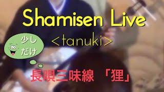 Shamisen Live 「tanuki」
