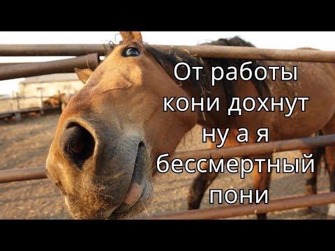 Для, от работы кони дохнут картинки прикольные с надписями