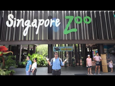 singapore-zoo-2019-tour-guide-|-do-bandar-zoo-ke-andar-|-ticket-price