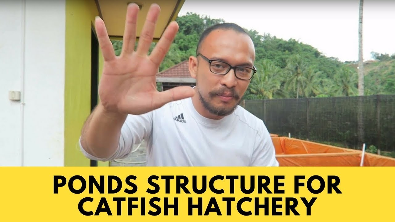Download Ponds Structure for Catfish Hatchery