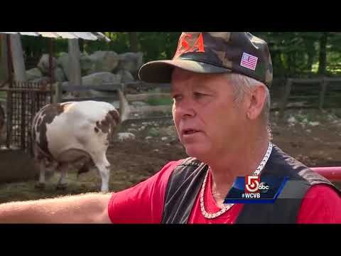Owner of escaped bull upset with shooting